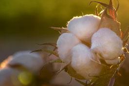 SALUD_ALGODON_BENEFICIOS_natural_organico_ecologico_bio_higiene_femenina_mujeres_irritaciones_alergias_piel