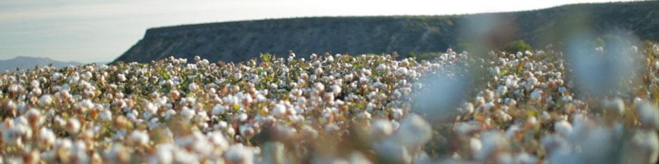 ALGODON_ECOLOGICO_SALUD_MEDIO_AMBIENTE_CERTIFICADO_ICEA_Global_Organics_Textile_Standard_Cotton_ Inc